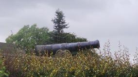 Le canon dans un secteur de l'arborétum Photo stock