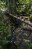 Le canyon des cascades Image libre de droits