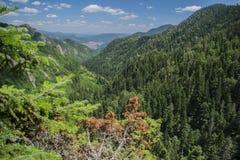 Le canyon des cascades Photo stock