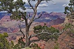 Le canyon grand Photos stock