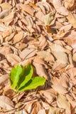 Le caoutchouc d'automne part du fond Image libre de droits