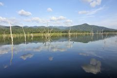 Le carcasse di legno sull'acqua e sul cielo blu riflette la superficie in diga di Srinakarin Immagini Stock Libere da Diritti