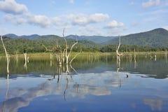 Le carcasse di legno sull'acqua e sul cielo blu riflette la superficie in diga di Srinakarin, Kanjanaburi Fotografia Stock