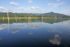 Le carcasse di legno sull'acqua e sul cielo blu riflette la superficie in diga di Srinakarin, la provincia di Kanjanaburi, Tailan Fotografie Stock Libere da Diritti
