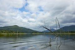 Le carcasse di legno sull'acqua e sul cielo blu riflette la superficie in diga di Srinakarin, provincia di Kanjanaburi Immagini Stock Libere da Diritti