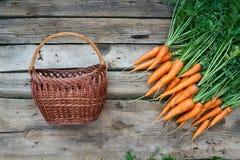 Le carote fresche con le foglie verdi e svuotano il canestro di vimini Fotografie Stock Libere da Diritti