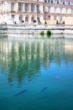 Le carpe nuotano nello stagno del parco di Fontainebleau fotografia stock