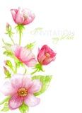 Le carte dell'invito dell'acquerello con l'estratto rosa fiorisce gli elementi Fotografia Stock Libera da Diritti