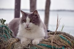 LE CAT À VENISE ME REGARDENT photo libre de droits