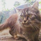 Le cat& x27 ; regard fixe de s image stock