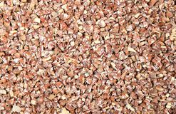 Le catechu de noix de bétel ou d'arec de coupure Image stock