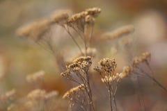 Le Caucase L'automne de е de ½ du ½ Ð du ¾ Ð de ФРfleurit dans un pré Le fond n'est pas au foyer Image stock