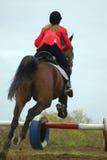 Le cavalier et le cheval Image stock