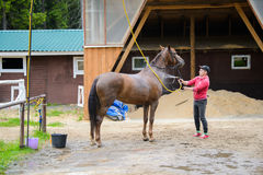 Le cavalier nettoie le cheval Images libres de droits