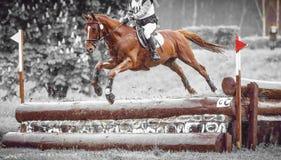 Le cavalier saute un cheval pendant la pratique sur le cours de concours complet de pays croisé, art de duotone photographie stock