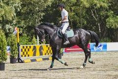Le cavalier sur le cheval noir Image libre de droits