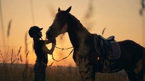 Le cavalier vérifie un cheval dans un domaine, vue de côté Concept d'amour d'homme et d'animal banque de vidéos