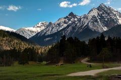 Le cavalier voyage dans les montagnes Images stock