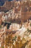 Le cayon de Bryce rougeoie dans la lumière de début de la matinée Photographie stock