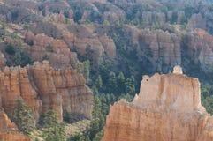 Le cayon de Bryce rougeoie dans la lumière de début de la matinée Images libres de droits