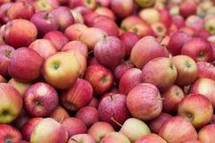 Le centinaia di mele si chiudono Fotografia Stock