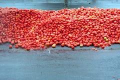 Le centinaia di pomodori hanno accatastato il livello per la lotta dell'alimento all'evento Fotografia Stock
