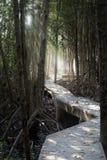 Le centre d'éducation de nature pour la conservation et l'éco-tourisme de palétuvier Images stock