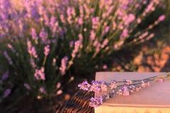 Le centre mou d'un groupe de lavande fleurit au-dessus des livres sous la lumière de coucher du soleil d'été Concept romantique d Image libre de droits