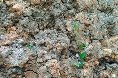 Le centre sélectif de petits arbres se développent dans la pile du sol sec photo libre de droits