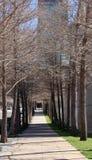 Le centre ville de route droite et d'arbres dedans de la ville Photographie stock