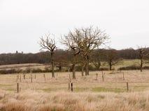 le cercle des arbres nus de branche mettent en place le pays spécial de nature Photographie stock