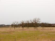 le cercle des arbres nus de branche mettent en place le pays spécial de nature Image libre de droits