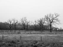 le cercle noir et blanc des arbres nus de branche mettent en place la nature spéciale Image libre de droits