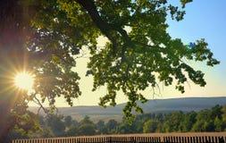 Le chêne le plus ancien en Roumanie étant approximation prévue à 900 ans Photographie stock libre de droits