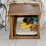 Le chêne rouge a fait le chenil de chien pour de petits chiens Image stock