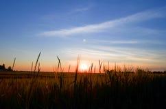 Le champ à l'aube Image libre de droits