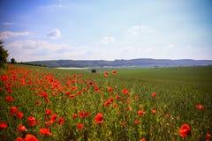 Le champ énorme des fleurs rouges de pavots photographie stock libre de droits