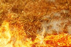 Le champ brûle pendant l'été par sécheresse Photographie stock