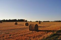 Le champ d'agriculture avec la paille roule dans la lumière de soirée image stock