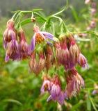 Le champ d'automne fleurit, a mouillé de la pluie Images stock