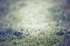 Le champ d'herbe verte et les baisses du matin mouillent Photographie stock libre de droits