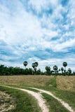 Le champ de la sécheresse, en raison du manque de pluie Photographie stock