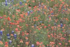 Le champ de peindre capot indien et bleu fleurit photo libre de droits