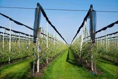 Le champ de pommiers de floraison dans la plantation agricole, en soleil d'été avec la fabrication paragrêle pour la protection c Photographie stock libre de droits