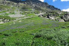Le champ des fleurs d'ancolie sur le fond des montagnes images stock