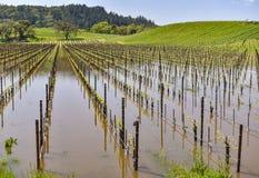 Le champ des vignes sont sous l'eau Image libre de droits