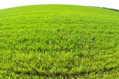 Le champ du blé croissant. Lentille de fisheye prise par photo Photographie stock libre de droits
