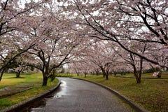Le champ et la route de Sakura près de la porcelaine de Tian se garent, saga-ken, Japon Image libre de droits
