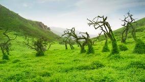 Le champ herbeux vert sauvage a tourné vert après pluie images libres de droits