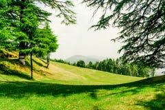 Le champ vert avec des pins de sapin a tiré contre des montagnes Photos stock